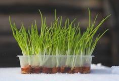 fresh vert vegetablesisolated, macro, nature, Photographie stock libre de droits