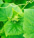 Fresh vibrant green leaves Royalty Free Stock Image