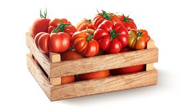 Fresh village tomatoes in wooden case with clipping path royalty free stock photos