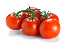 Fresh vine ripened tomatoes. Lovely fresh vine ripened tomatoes.  on white Royalty Free Stock Images