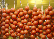 Fresh vine tomatoes hanging for sale Stock Images