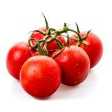 Fresh vine tomatoes Stock Images