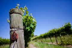 Fresh Vines Royalty Free Stock Photography