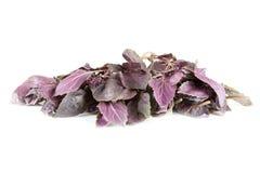 Fresh violet basil Stock Photography