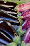 Fresh violet eggplant in summer outdoor on market Royalty Free Stock Image