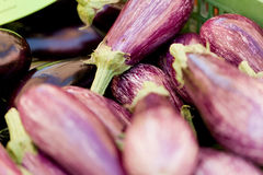 Fresh violet eggplant in summer outdoor on market Royalty Free Stock Photos