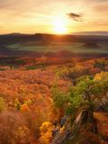 Fresh vivid colors of autumnal forest.  View over birch and pine forest Royalty Free Stock Image