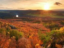 Fresh vivid colors of autumnal forest.  View over birch and pine forest Stock Image
