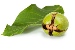 Fresh walnut with cracked peel and leaf Royalty Free Stock Photography