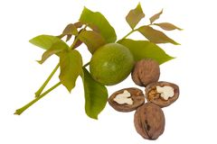 Fresh walnut and leaves Stock Photography