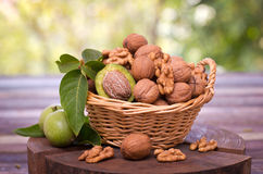 Fresh walnuts in the basket Royalty Free Stock Photography