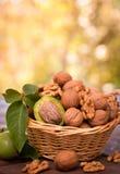 Fresh walnuts in the basket Stock Photo