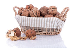 Fresh walnuts in basket Royalty Free Stock Photo