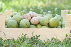 Fresh walnuts in a box, natural background Stock Photography