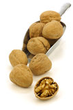 Fresh walnuts and a cracked one on a metal scoop Royalty Free Stock Images