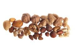 Fresh walnuts and hazelnuts royalty free stock photography