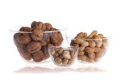 Fresh walnuts and hazelnuts stock images