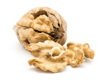 Fresh walnuts isolated royalty free stock images