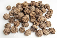 Fresh walnuts in shell Royalty Free Stock Photography