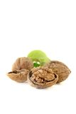 Fresh walnuts with walnut leaves Royalty Free Stock Images
