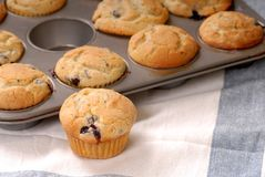 Fresh warm blueberry muffins Stock Photography