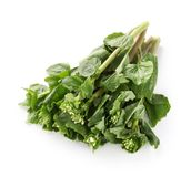 Fresh wasabi leaves and stalks Stock Images