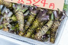 Fresh wasabi root in japanese market Stock Images