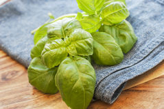 Fresh washed basil. On a blue fabric. Selective focus Stock Images