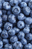 Fresh washed blueberries from above Royalty Free Stock Photos