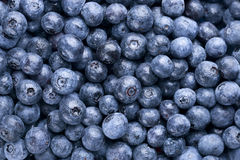 Fresh Washed Blueberry Background stock photo