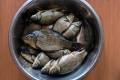 Fresh washed brilliant small lake fish roach lies in a metal plate on a wooden table. Washed brilliant small lake fish roach lies in a metal plate on a wooden stock photo