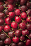 Fresh Washed Cherries Royalty Free Stock Photography