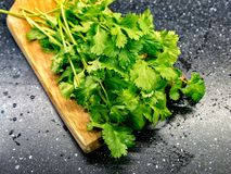 Fresh Washed Coriander, Green Cilantro. Chopped Cilantro, Coriander on a Wooden Cutting Board. Nice Delicious Fresh Herbs stock photography