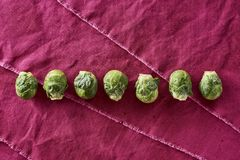 Fresh Washed Organic Brussel Sprouts Brassica oleracea var. gemm Royalty Free Stock Photo