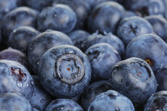 Fresh washed wet blueberries Stock Photography