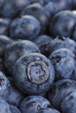 Fresh washed wet blueberries Royalty Free Stock Photo