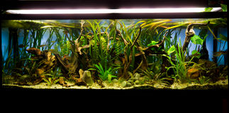 Fresh water aquarium Stock Images