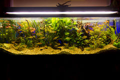 Fresh water aquarium Stock Image