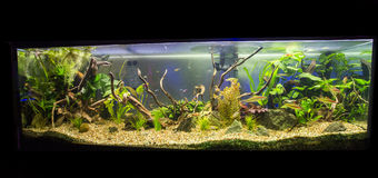 Fresh water aquarium Royalty Free Stock Image