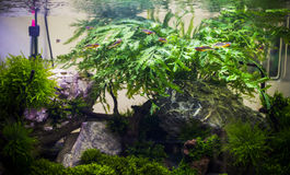 fresh water aquarium Royalty Free Stock Image