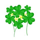Fresh Water Clover Plant on White Background Royalty Free Stock Photos