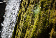 Fresh water. Detail of a waterfall with moss Stock Image
