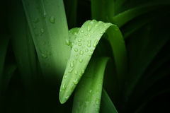 Fresh water drop on green grass leaf after rain. Selective focus on the waterdrop Stock Image