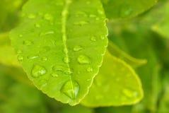 Fresh water drop Stock Photos