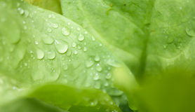Fresh water drop on grenn leaf background Stock Images