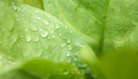 Fresh water drop on grenn leaf background. A fresh water drop on grenn leaf background Stock Images