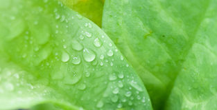 Fresh water drop on grenn leaf background Stock Photography
