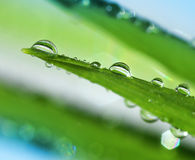 Fresh water drops on green leaf Royalty Free Stock Photo