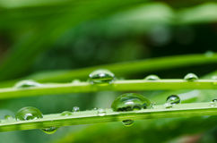Fresh water drops in green nature Stock Photos