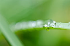 Fresh water drops in green nature Stock Photo
